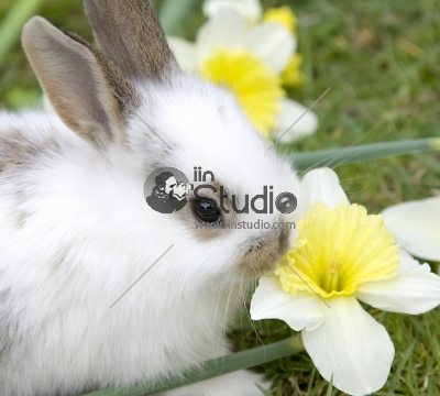 Easter Cute rabbit