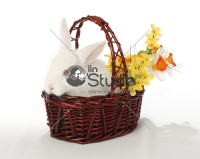 Easter bunny, albino rabbit in basket