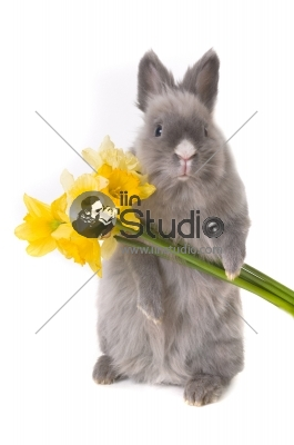 Funny bunny with bouquet of yellow narcissus