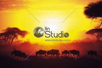 Way of life Countryside in Sunset Time