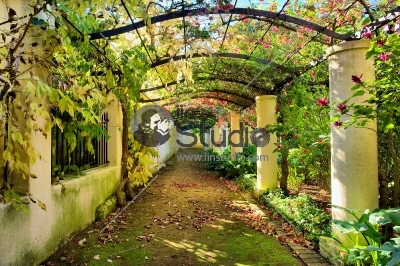 Autumnal arch covered by vine