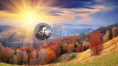 Rising-Sun-On-The-Forest