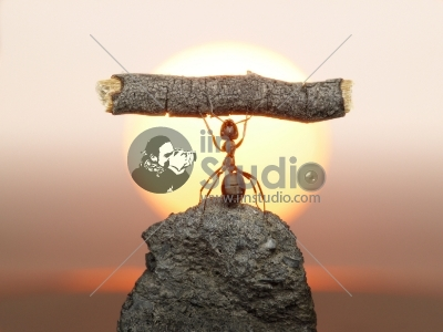 Statue of Labour, ants civilization living 150 million years because of working