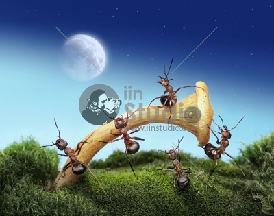 Team of ants launches spaceman to the moon, teamwork, fantasy