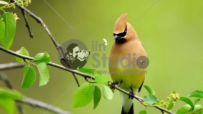 bird-hd-wallpaper