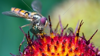 work-flowers-insects-fly-macro-hover-1080x1920