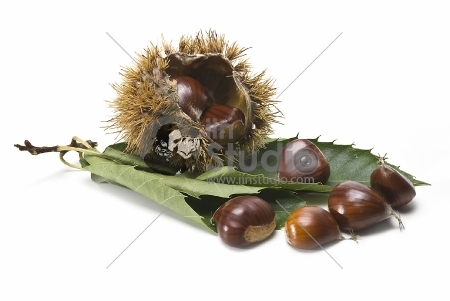 fresh chestnuts isolated over a white background.