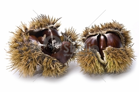 fresh chestnuts isolated over a white background