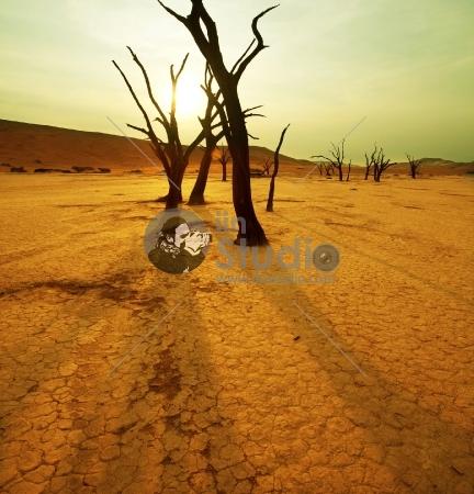 unwatered trees in desert