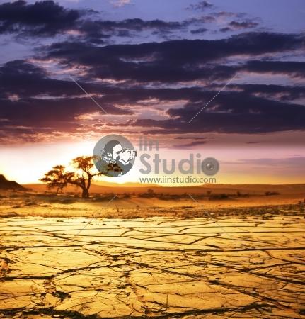 Evening in the desert