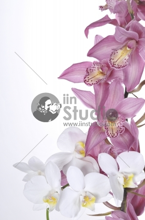 Beautiful pink and white orchids