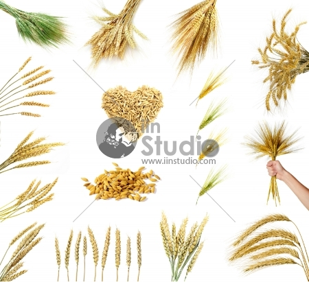Set of golden wheat and grains