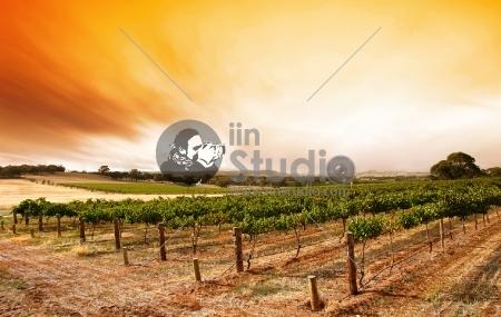 Sunrise over scenic vineyard