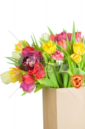 Tulips in paper bag isolated on white background