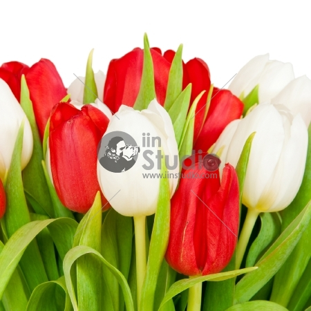 beautiful bouquet of tulips on white