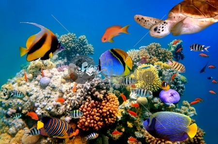 tropical fish and turtle on a coral reef