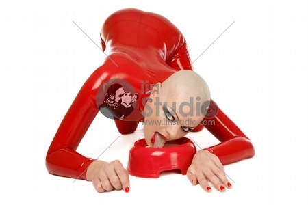Skinhead woman in red latex catsuit licking milk like cat, over white background