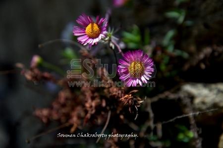 unknown little flowers.