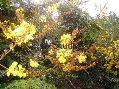 Yellow colored flowers