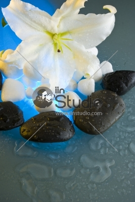 Lily flower and Black stones