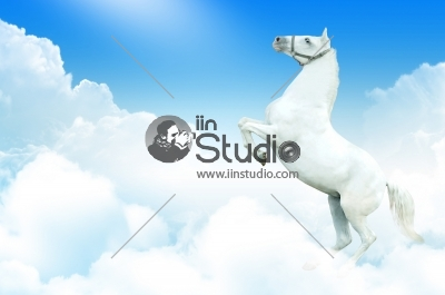White Horse Rearing In The Sky
